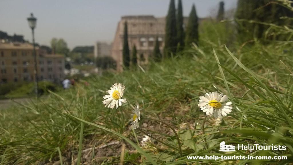 Rom besichtigen im Frühling