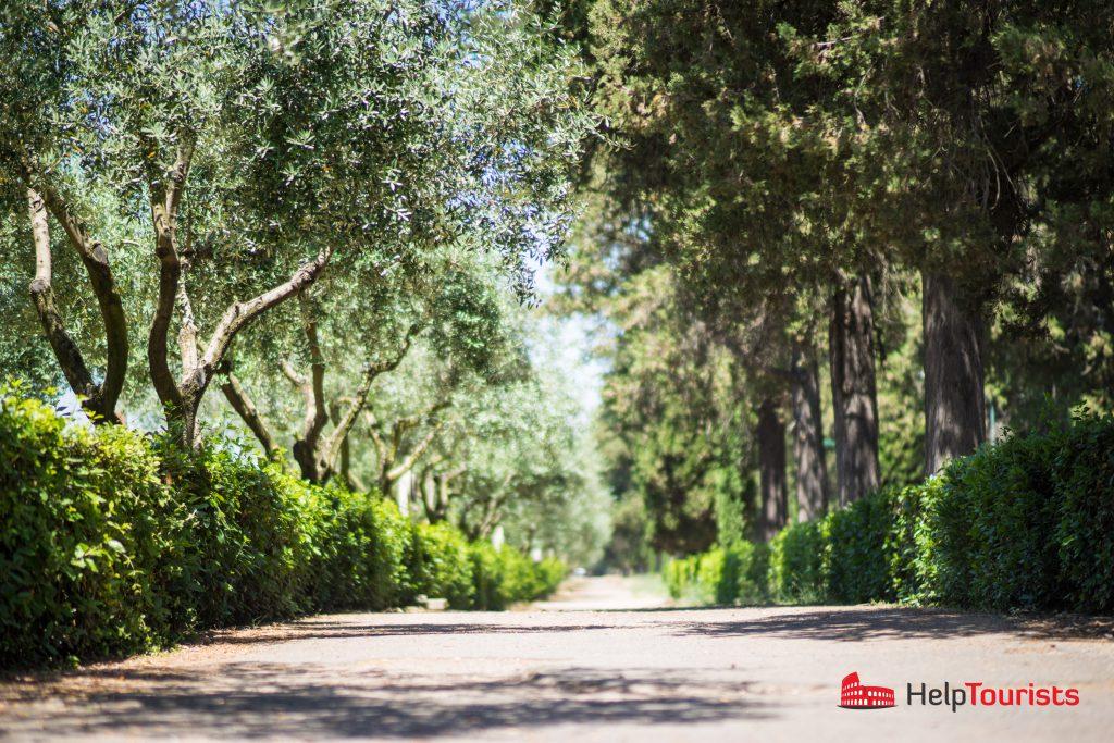ROM_Via-Appia-Antica_trees_l