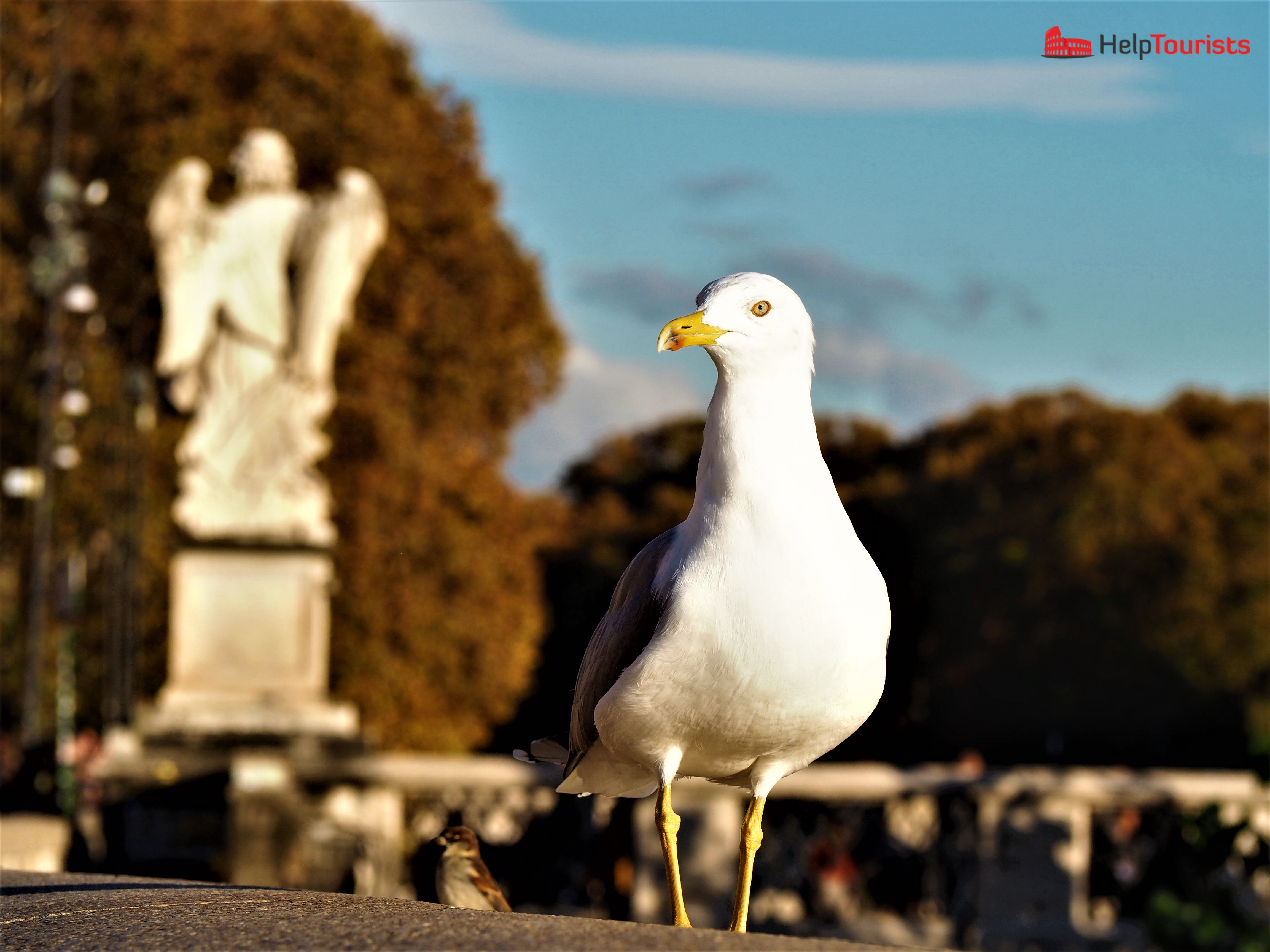 Rome autumn gull